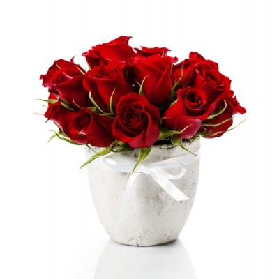 (5VRP01) 12 Red Rose Pot