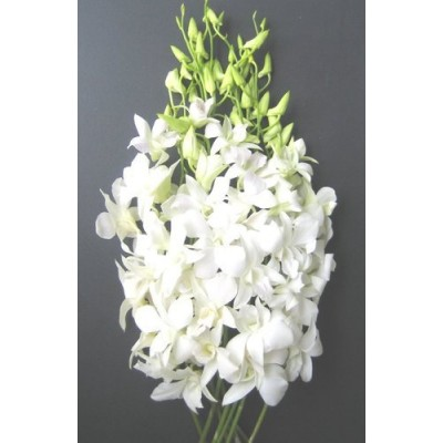 White Orchid  | Florist Bella Vista | Stylish Blooms